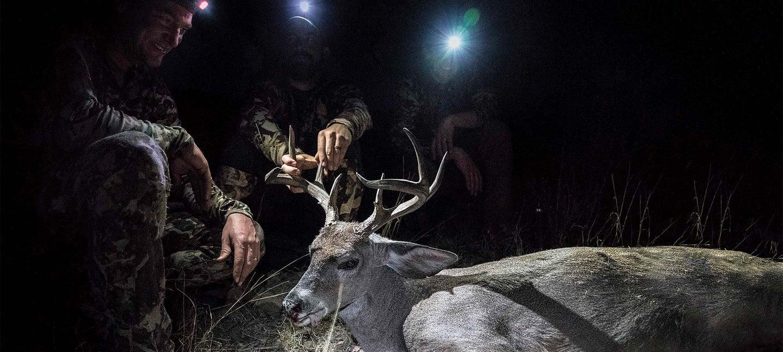 trophy coues deer at night