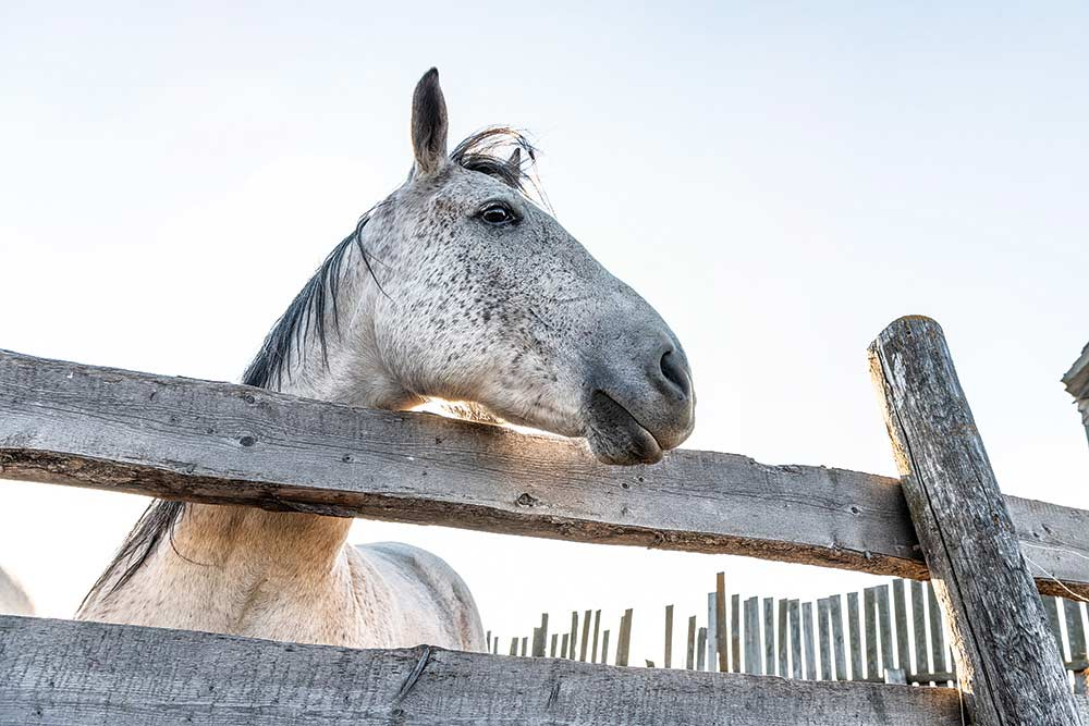 a horse standing behind a wooden fence