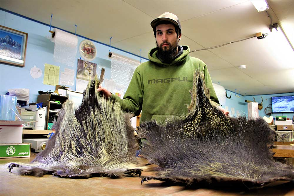 man holding up porcupine quills