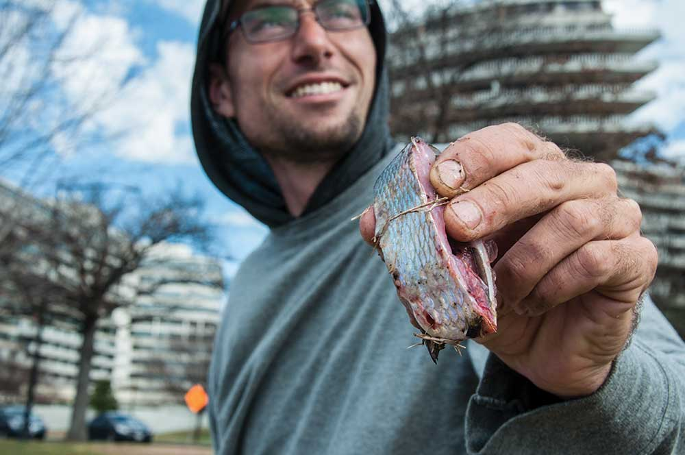 fisherman holding up gizzard shad