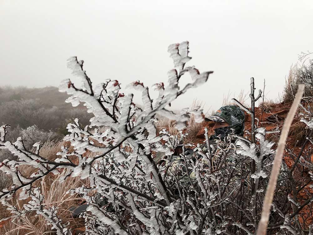 frozen bush branches