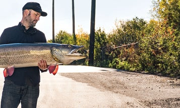 Pro Tips for Catching Muskie on the Fly