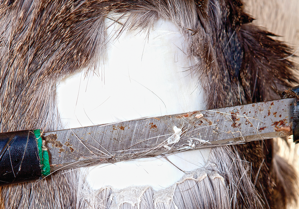 After the hair begins to slip, the hide must be thoroughly scraped.