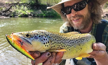 Lessons from the Trout Ninja: How to Catch Monster Brown Trout in Small Streams
