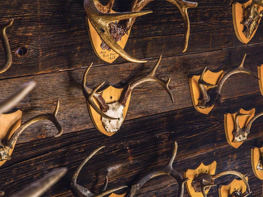 a collection of deer antler trophies on the wall