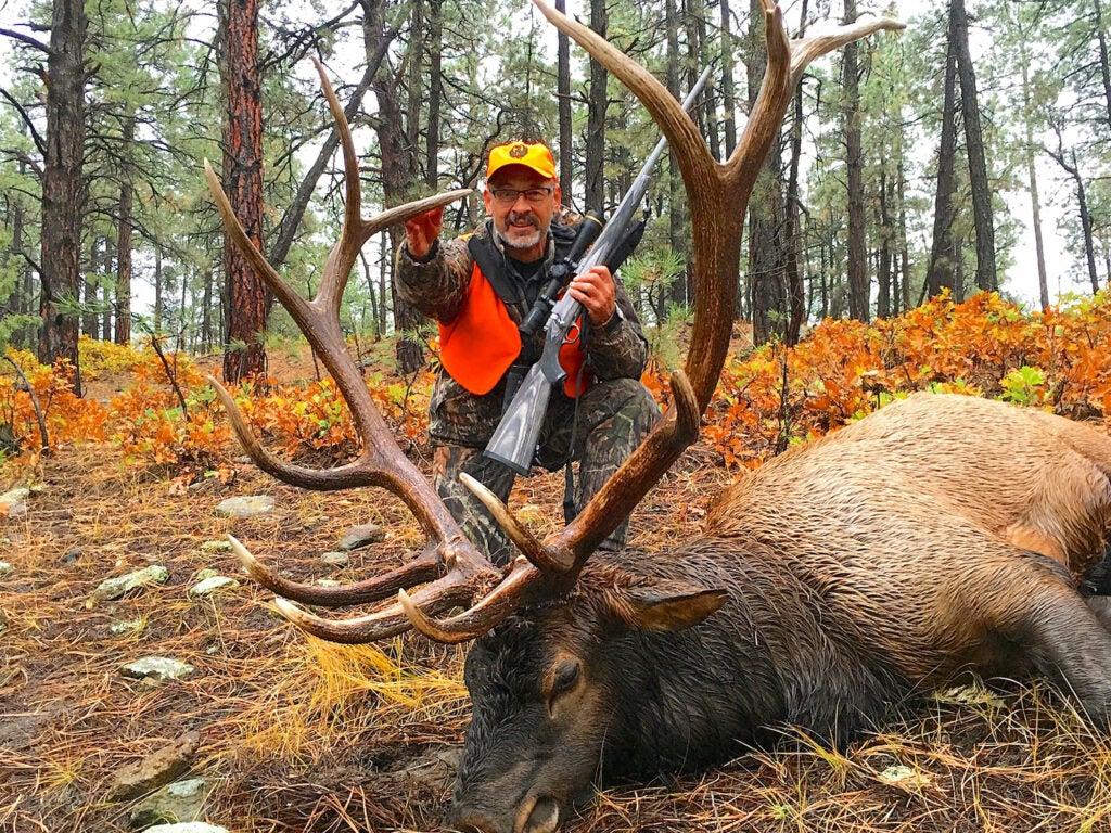 Hunter and fallen Colorado bull elk