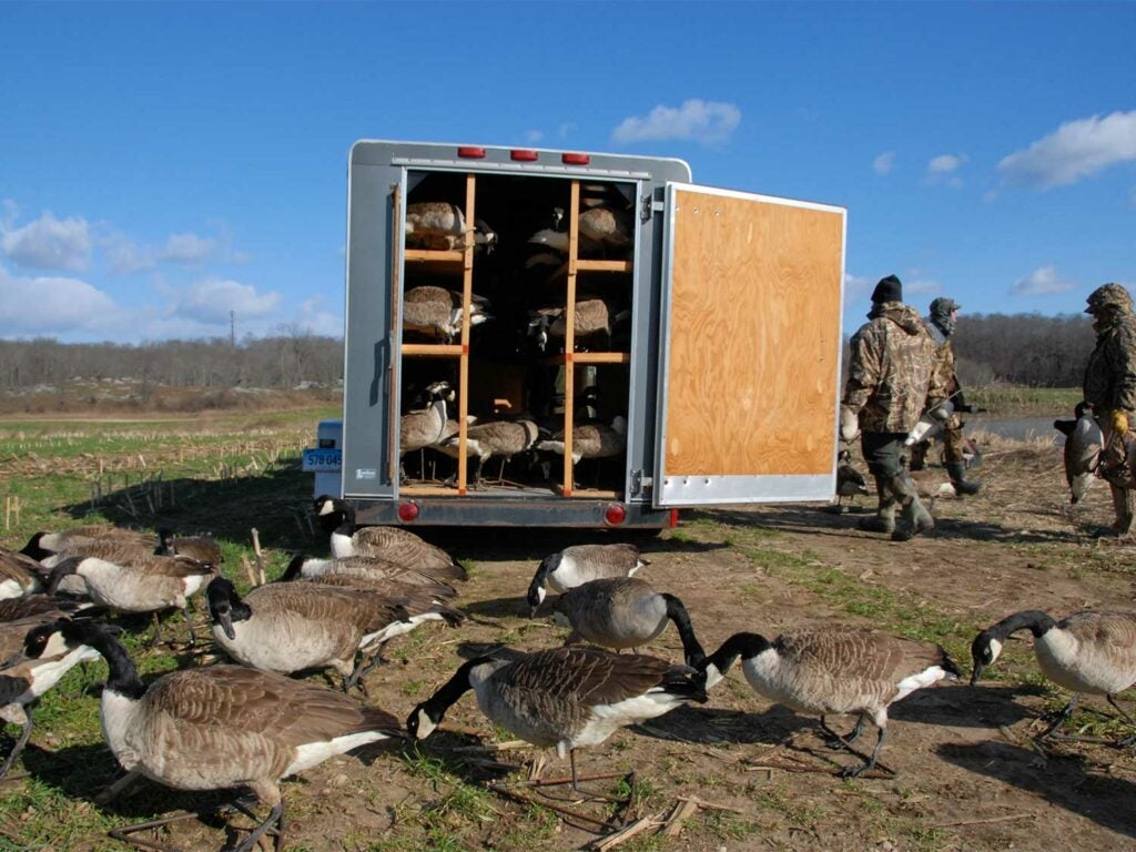 a trailer full of goose decoys