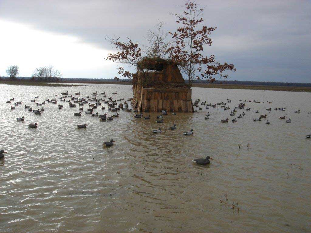 duck decoys in the water around a duck truck hunting blind