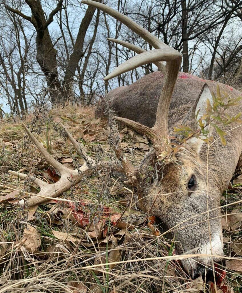 dead buck lying in the grass
