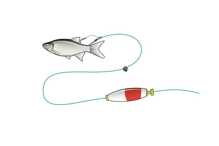 Clacker Rig bait fishing rig