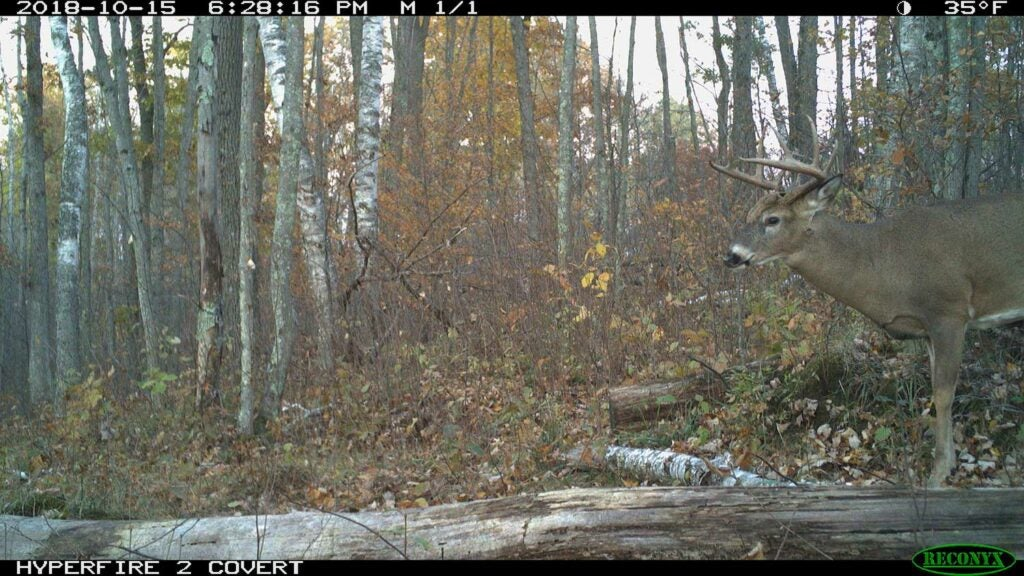 trail camera footage whitetail buck