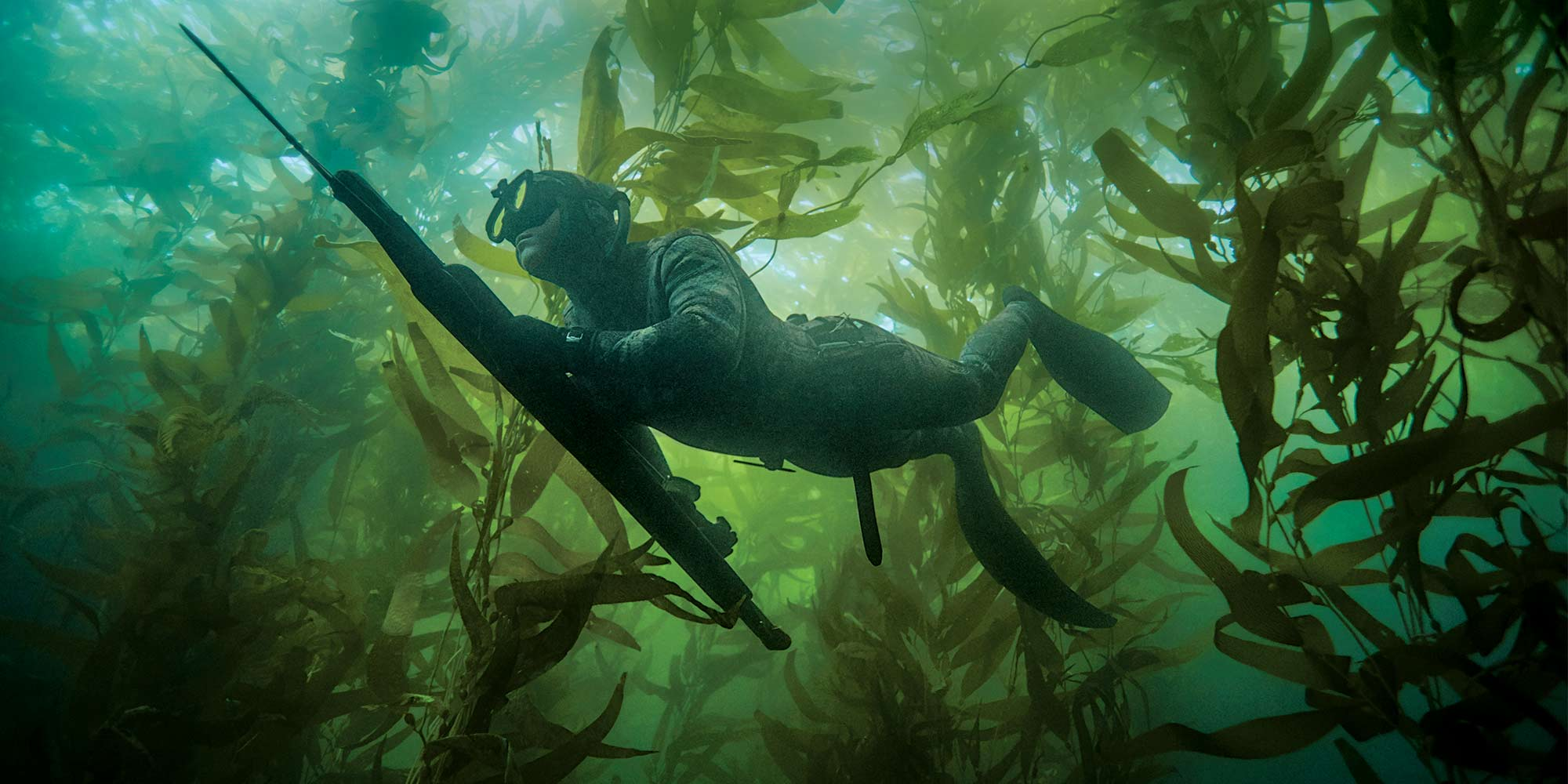 Spearfishing for the Gray Ghosts of Southern California
