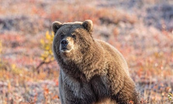 How to Pick the Right Sidearm for Backup Bear Protection