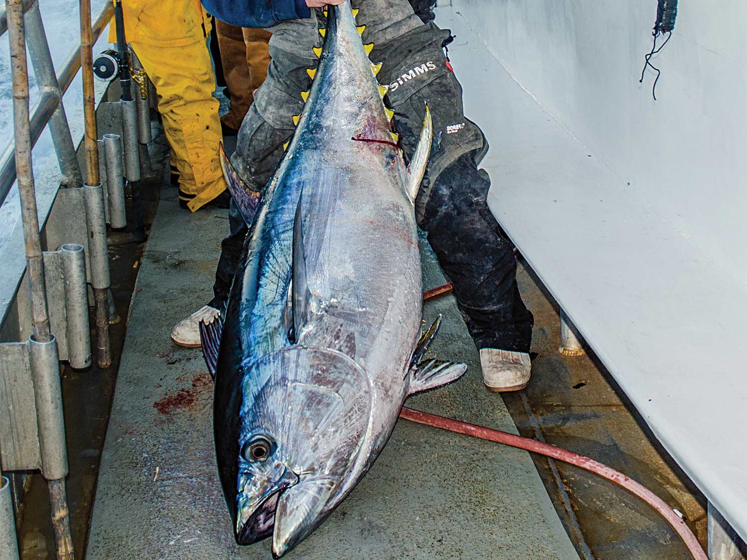 Want to Catch a Giant Tuna This Summer? Book a Headboat Trip