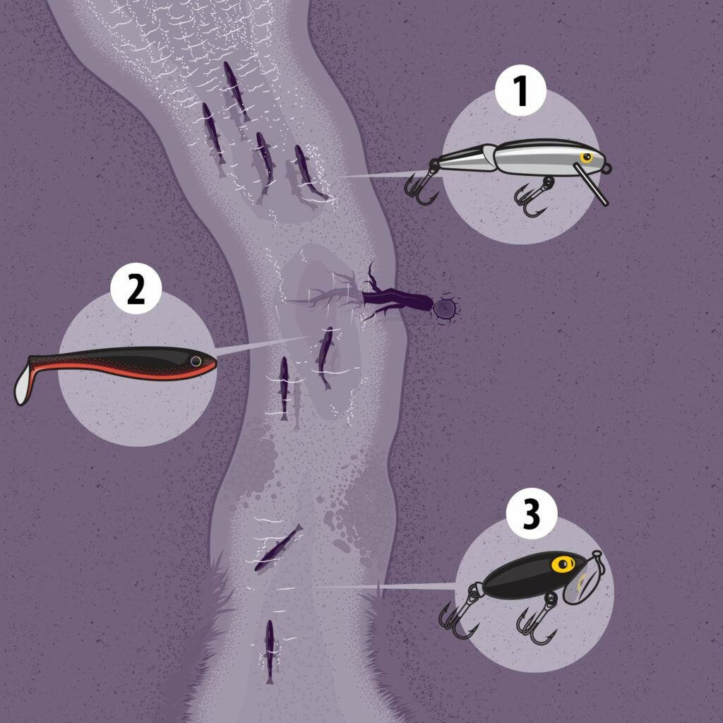illustration of trout fishing lures