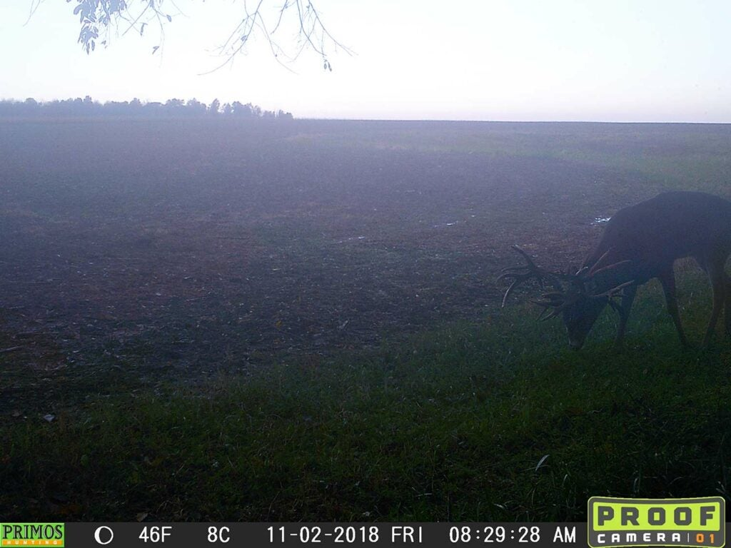 trail cam footage of a nontypical buck