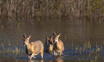 How Rainy Spring Weather Affects Your Deer Season