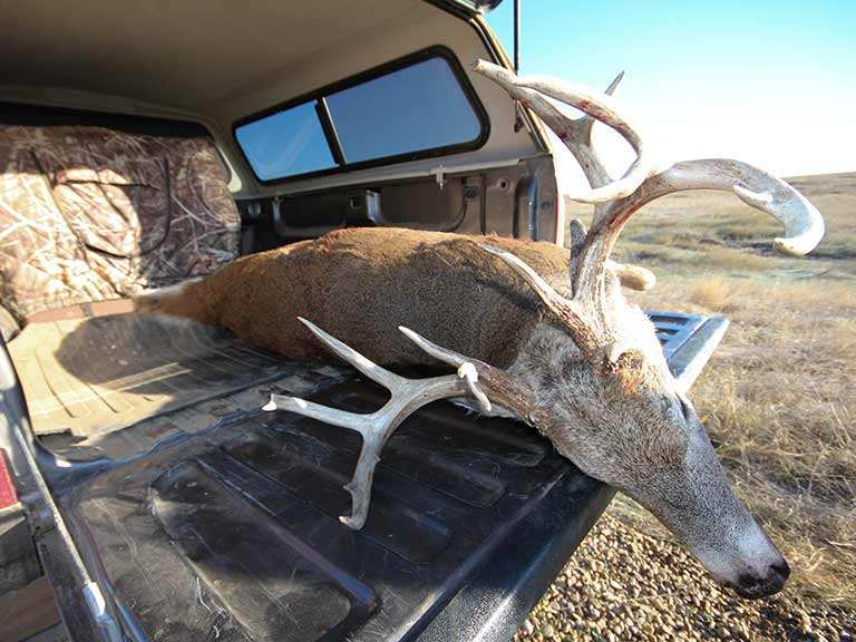 buck on a tailgate