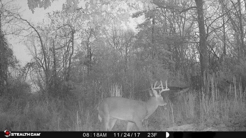 black and white trail cam photo