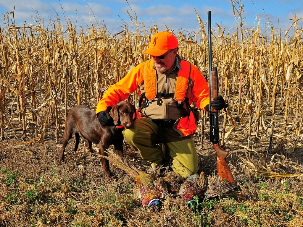a hunter kneeling behind pheasants with a hunting dog