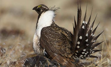 New Plan to Keep Critters Off the Endangered Species List Would Benefit Hunters and Anglers