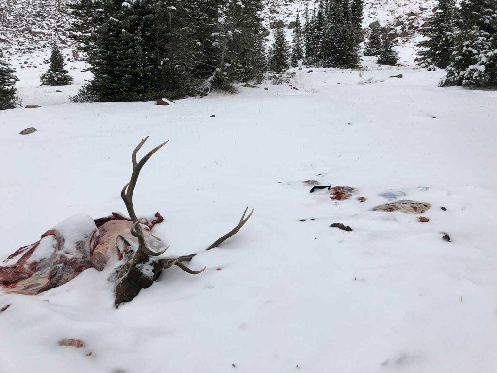dead elk preserved in the snow
