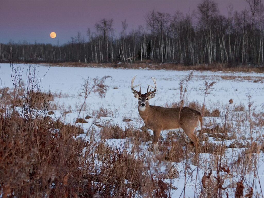 whitetail buck in the snow with the moon in the background.
