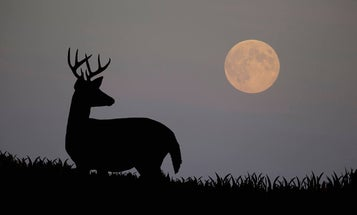 How Moon Phases Will Impact Deer Hunting During the Rut this Season