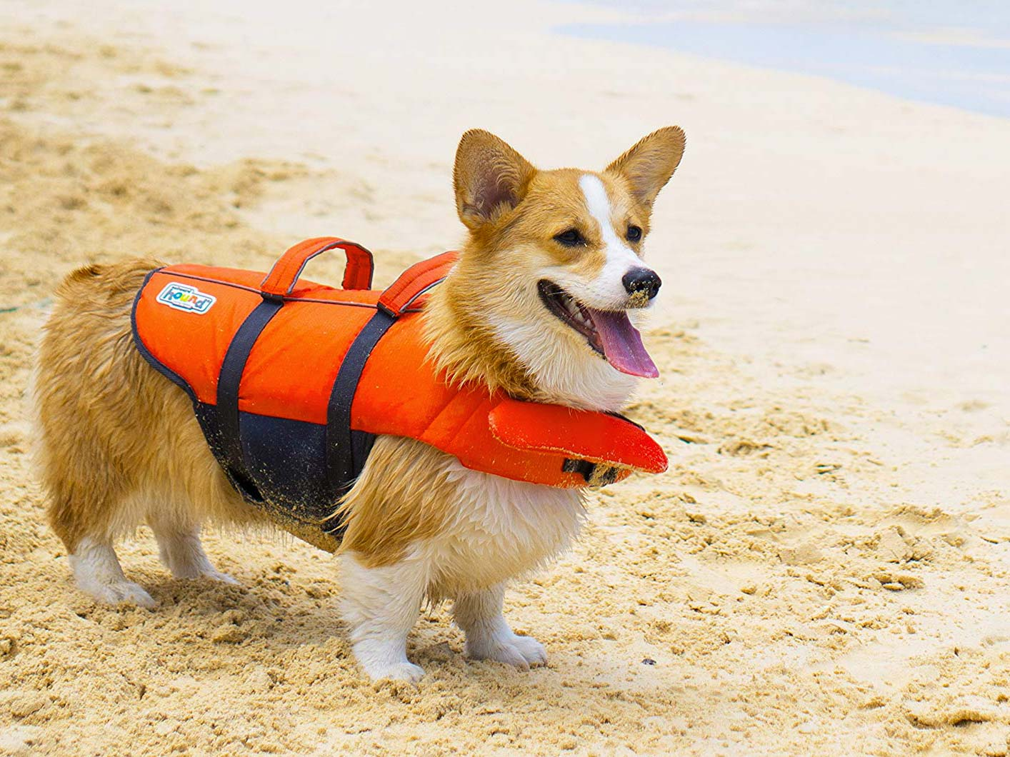 How to Keep Your Dog Safe on the Water