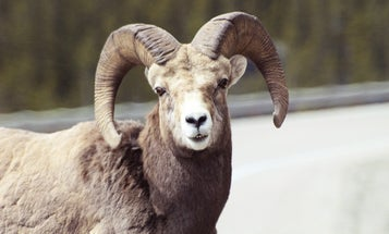 Road Kill Costs Millions, Endangers Lives, and Hurts Wildlife Populations. Here's a Plan to Fix That