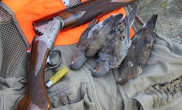 10 Dove Hunting Tips That Will Help You Shoot More Birds This Season