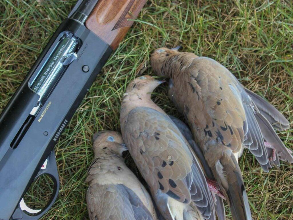 three doves on the ground beside a shotgun
