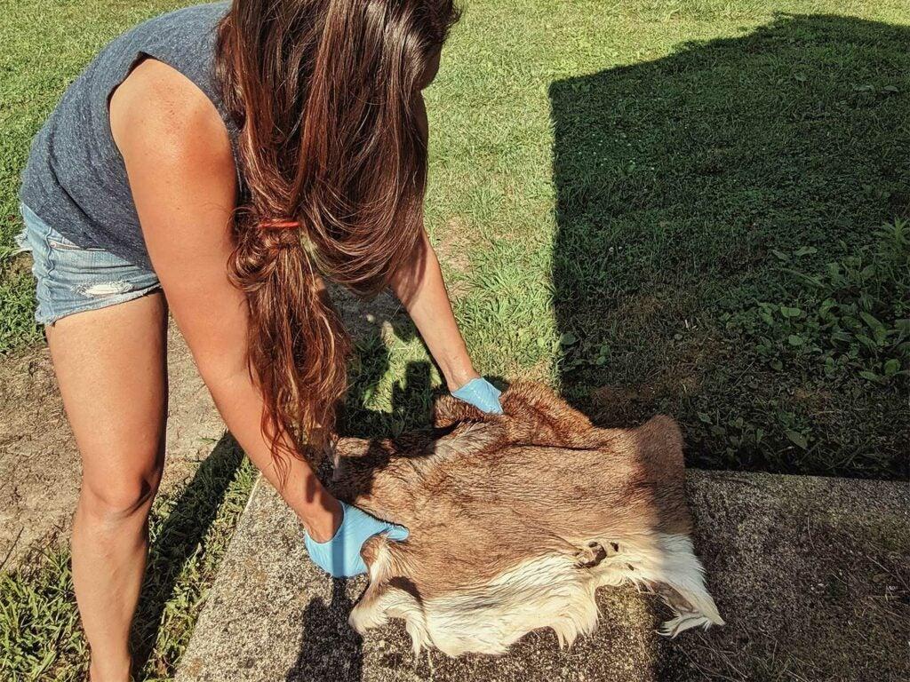 a woman softening a deer hide