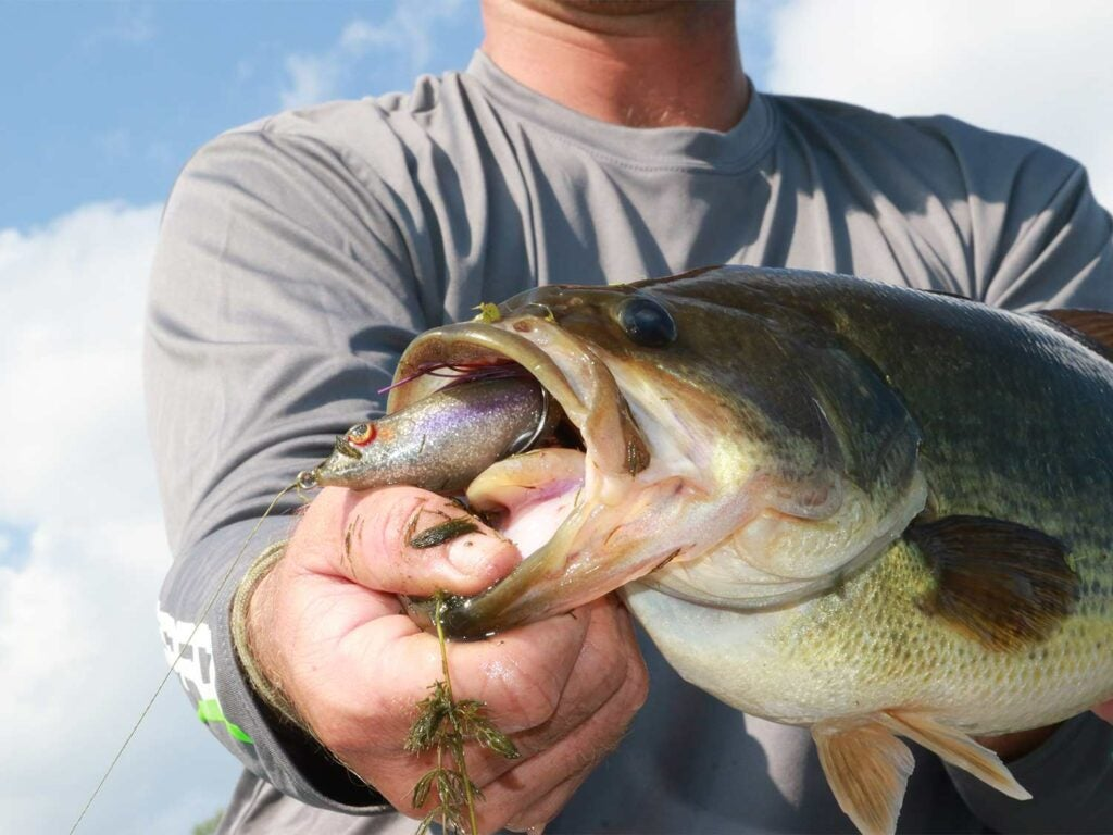 a largemouth bass caught on a topwater frog lure