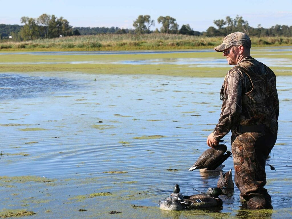 hunter wading in a lake placing duck decoys