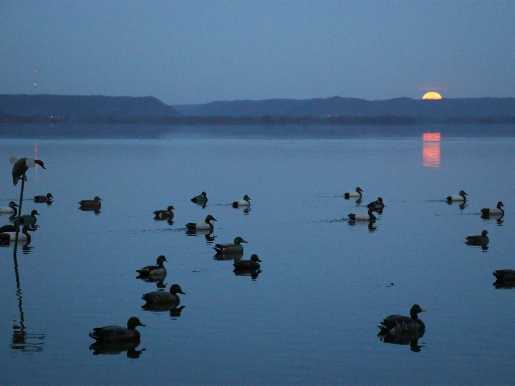 duck water sunset