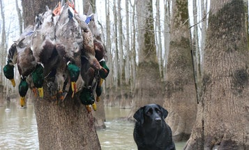 This Season's Duck Hunting Forecast