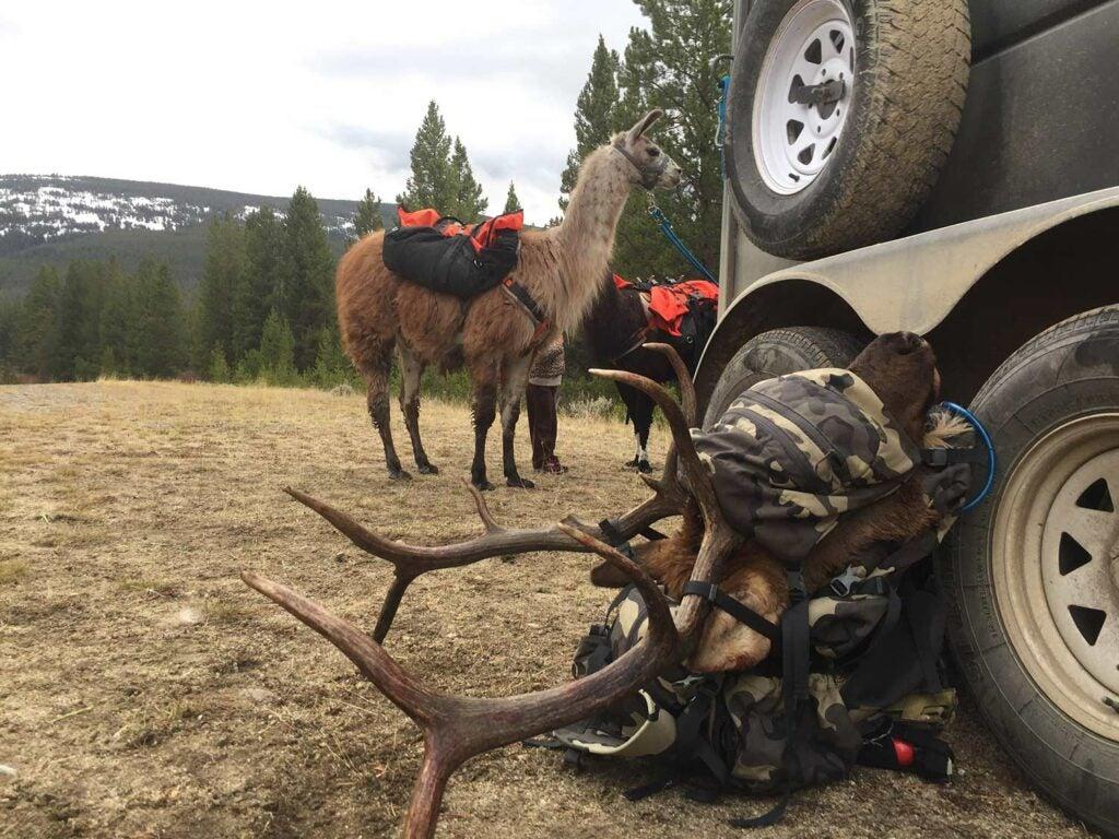 httpspush.outdoorlife.comsitesoutdoorlife.comfilesimages2019088-elk-head-pack.jpg