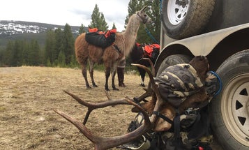 Find Elk From Your Kitchen Table With This 6-Step Digital Scouting Plan