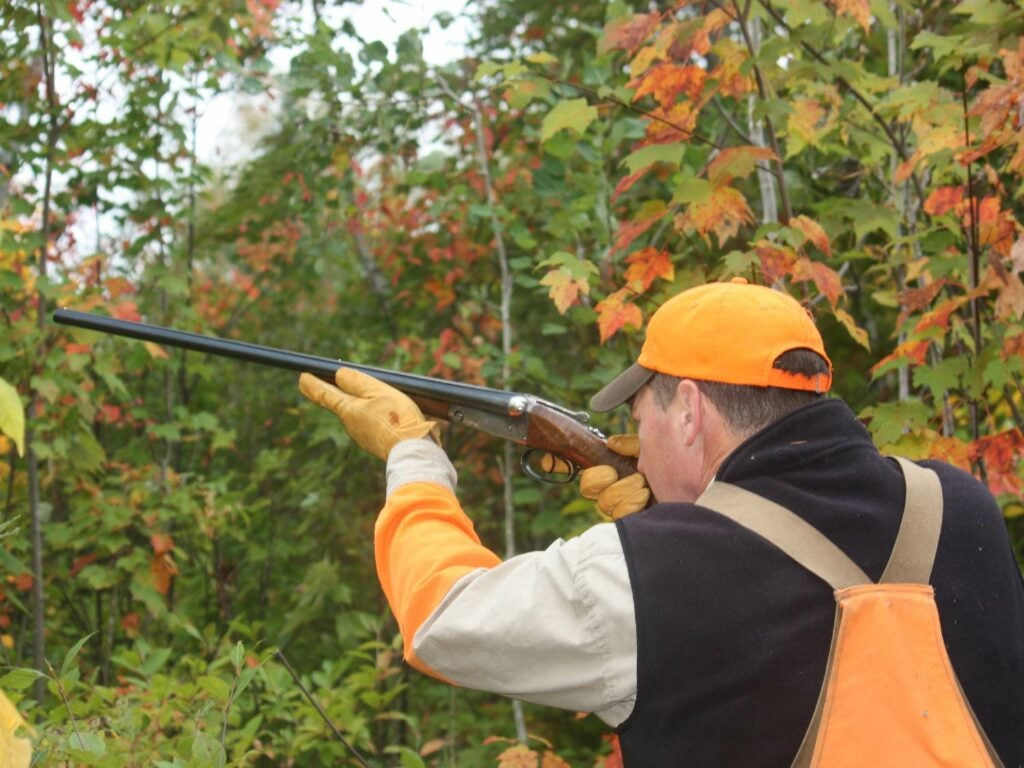 hunter aiming a shotgun in a forest