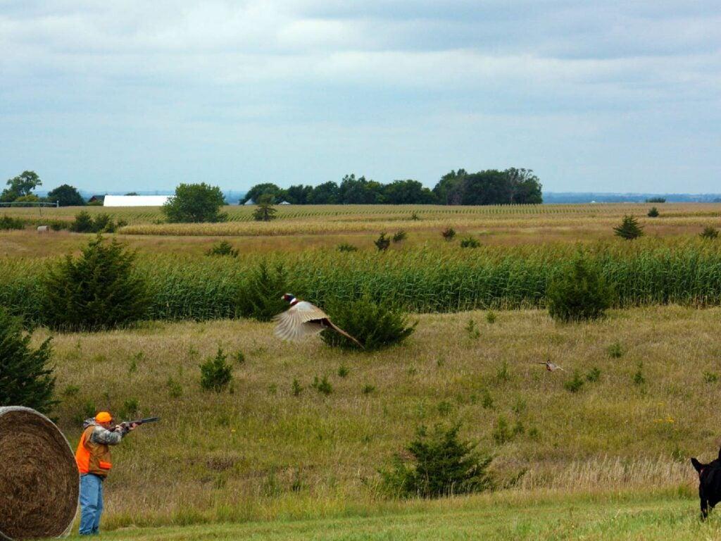 hunter aiming a shotgun in a field