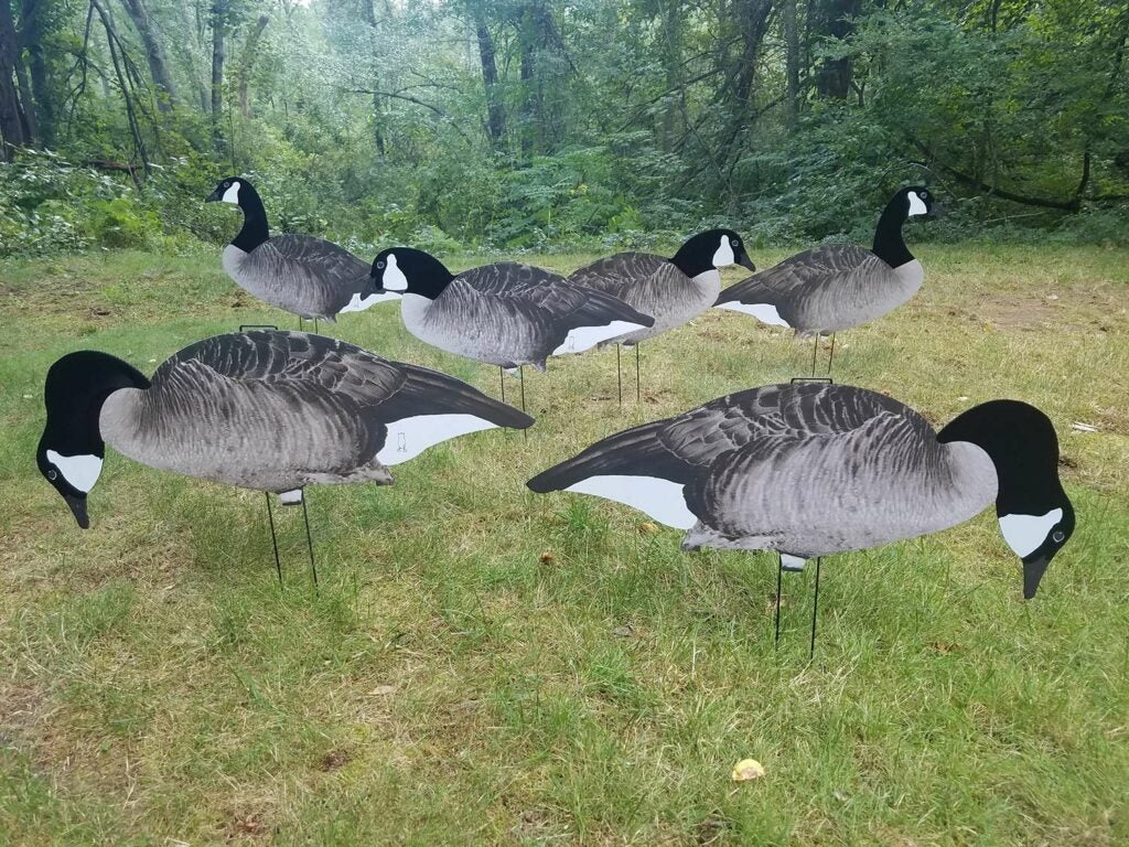a group of 2d geese decoys