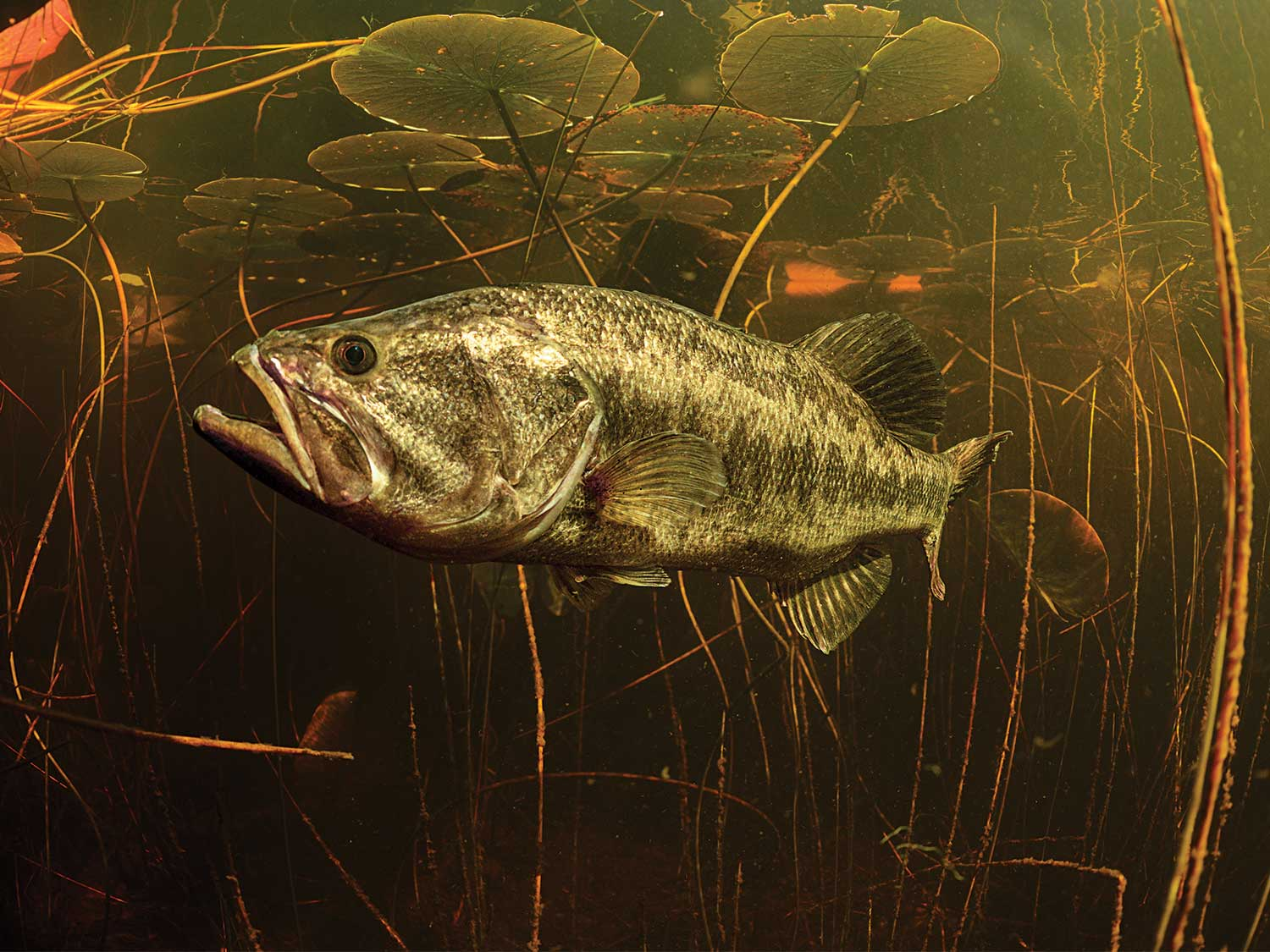 The Shiner Guides of Florida are the Kings of Stress-Free Big-Bass Fishing