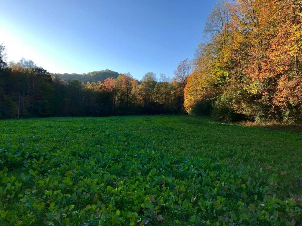 a giant food plot