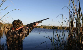 How to Hunt Ducks Without a Dog or a Boat