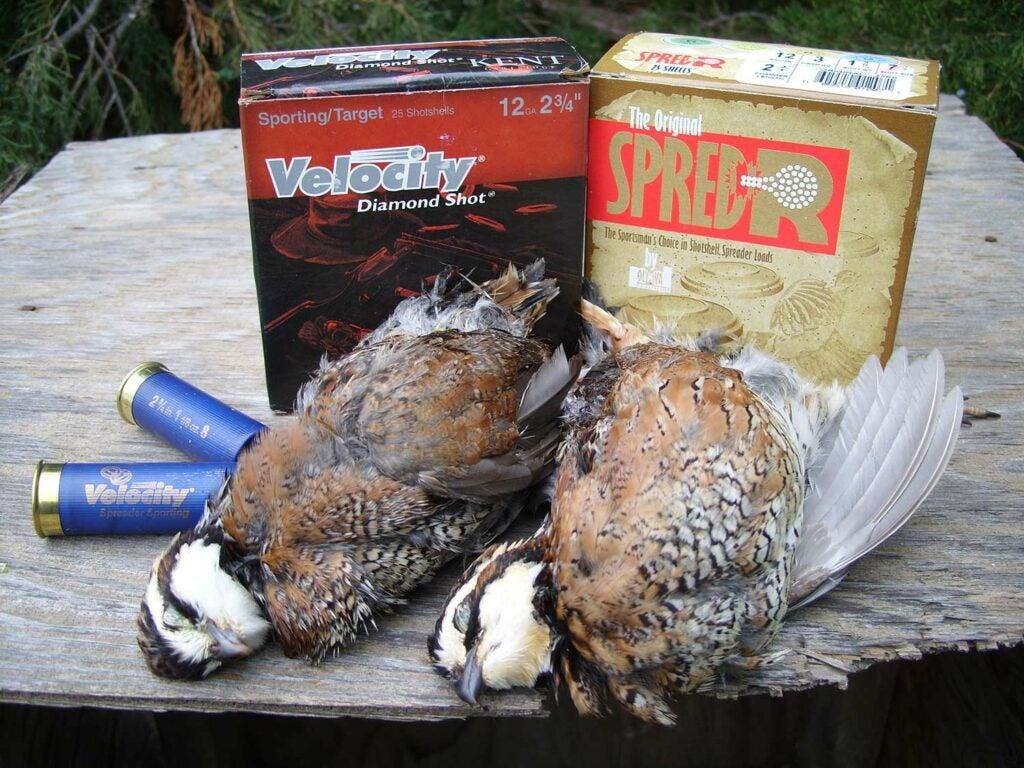kent and polywad shotgun ammo with quail hunting