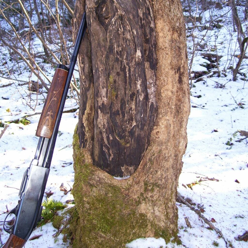 rifle leaning against a tree in the snow