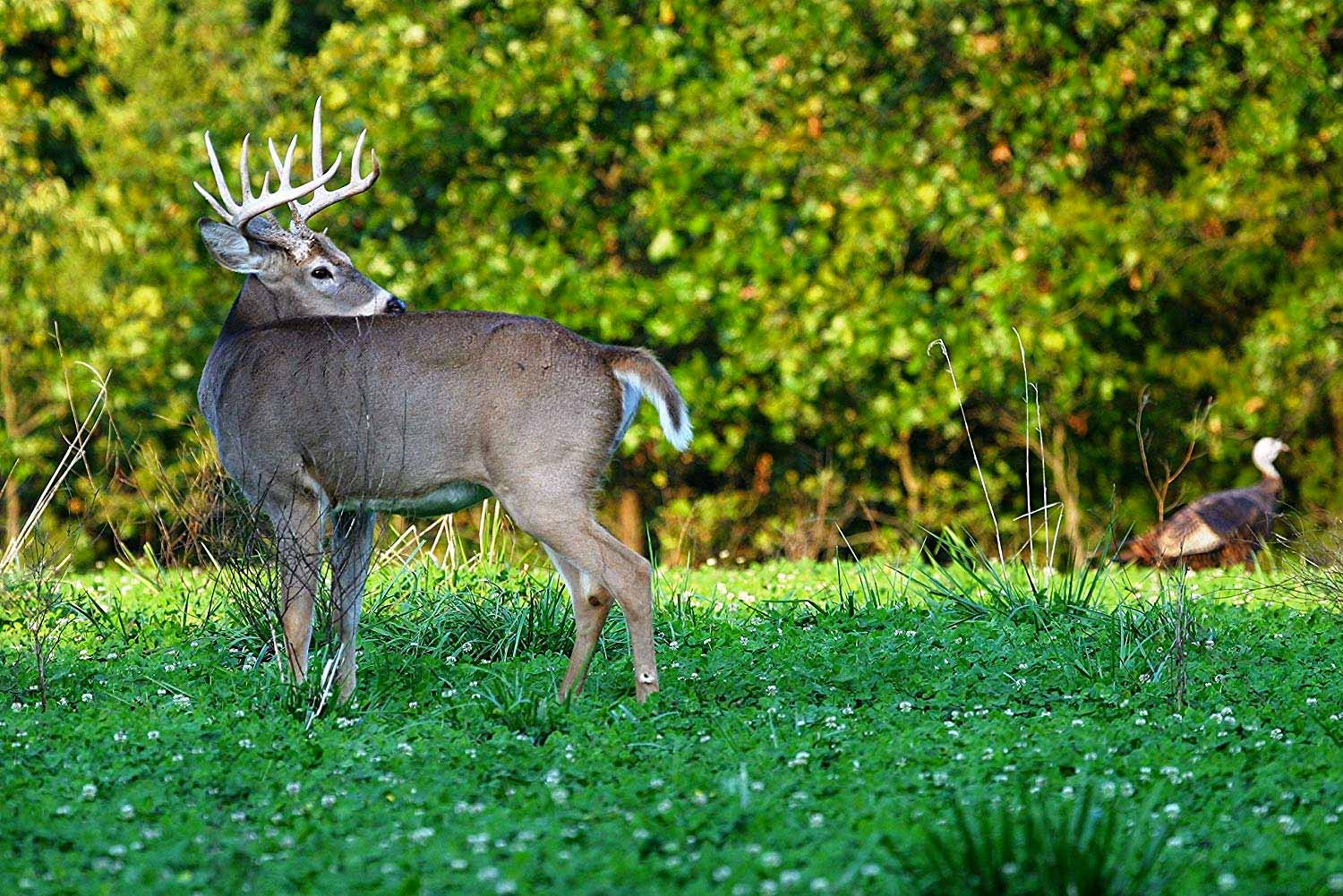 Plant Early Fall Food Plots for Late-Season Action
