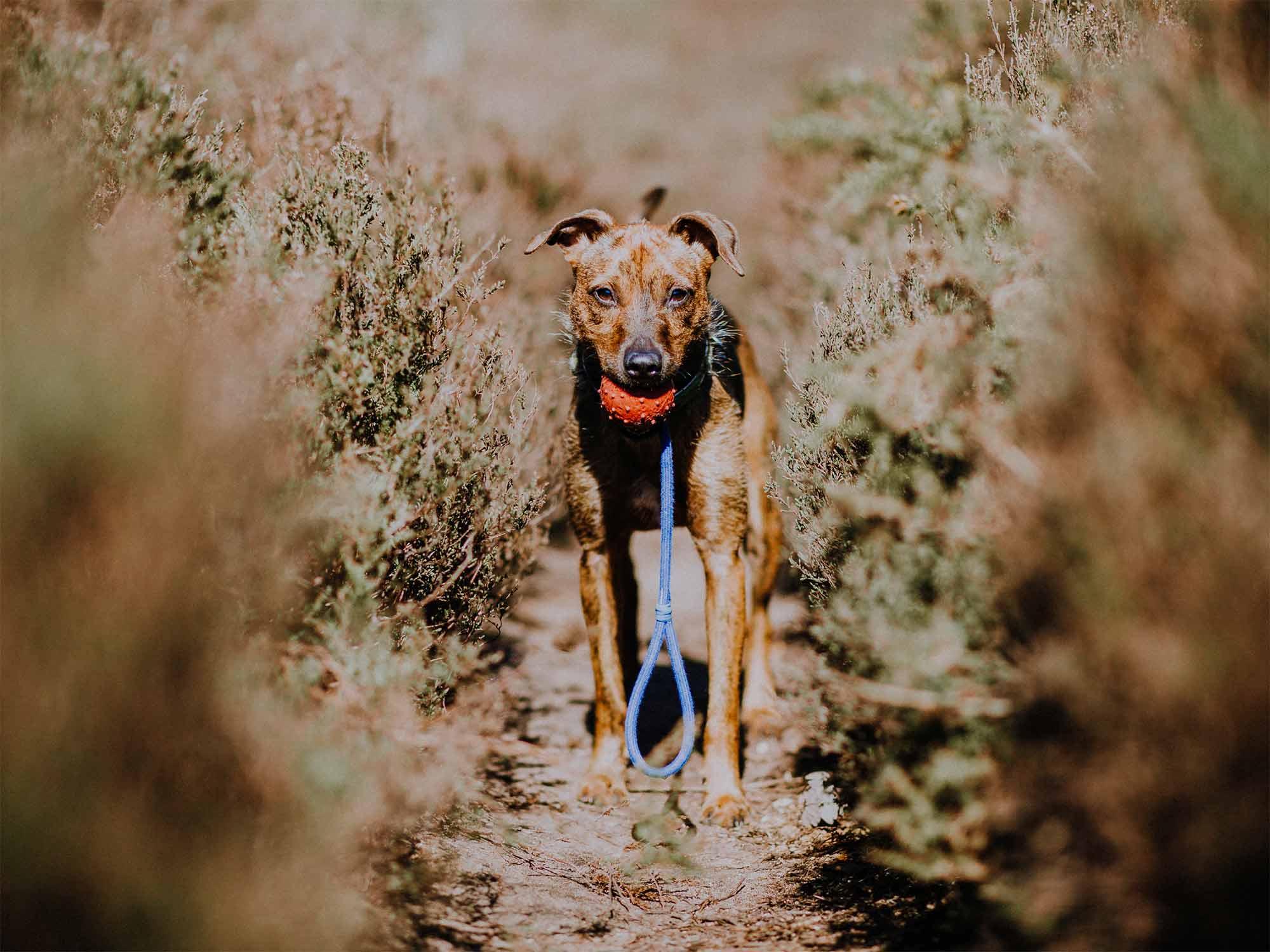 3 Essential Dog Training Tools