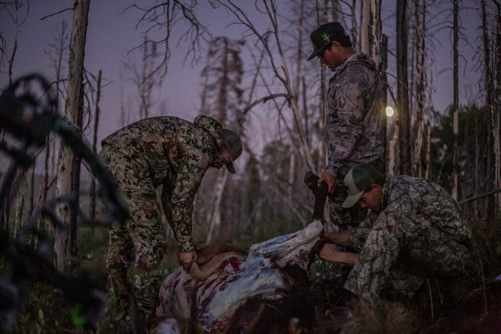 hunters quartering and field dressing an elk at night